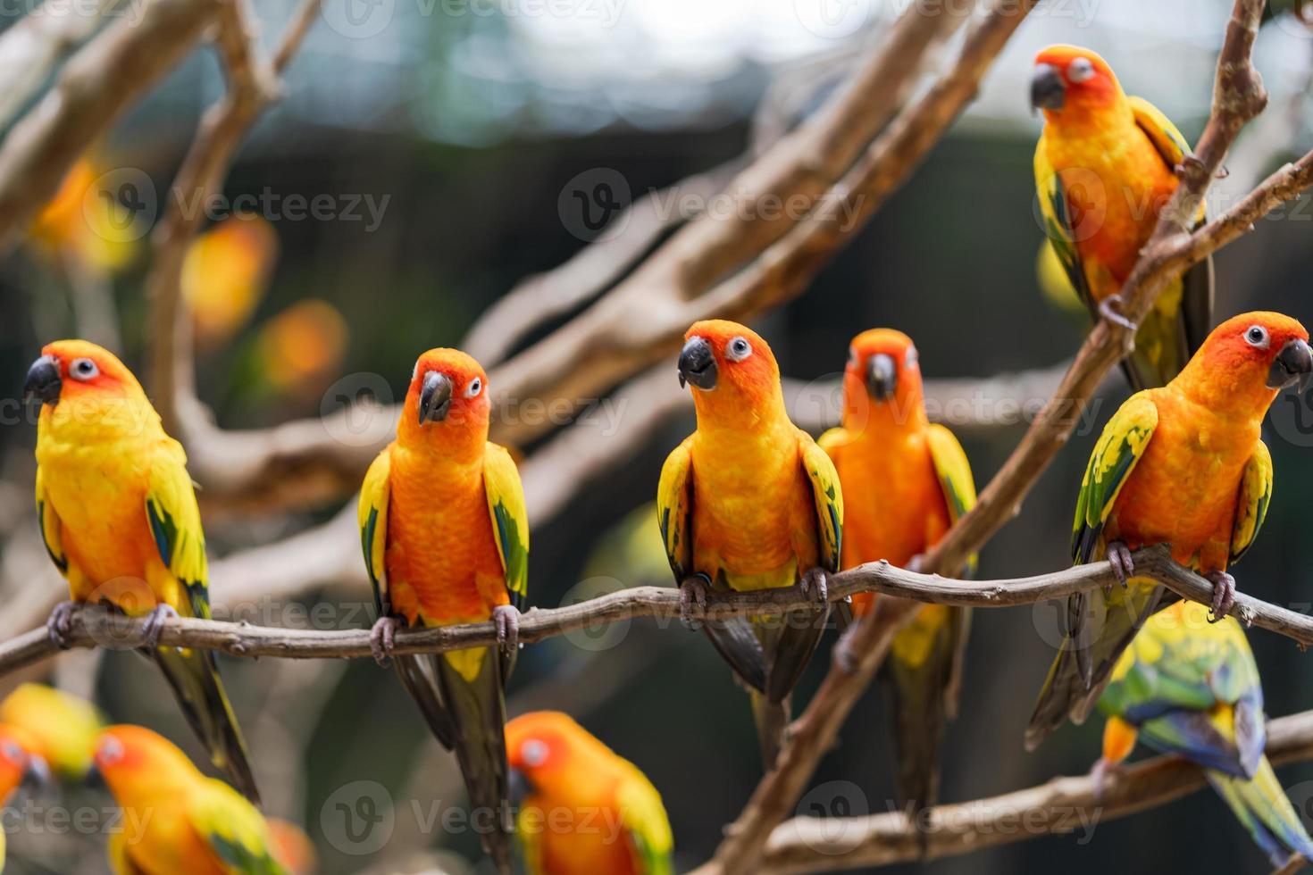 papagaios conure sol vibrante foto