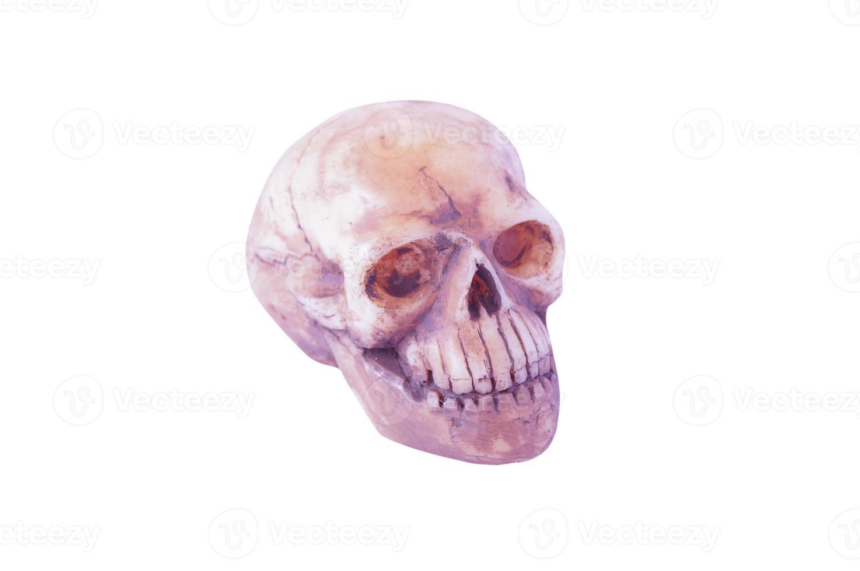 crânio isolado em fundo branco foto