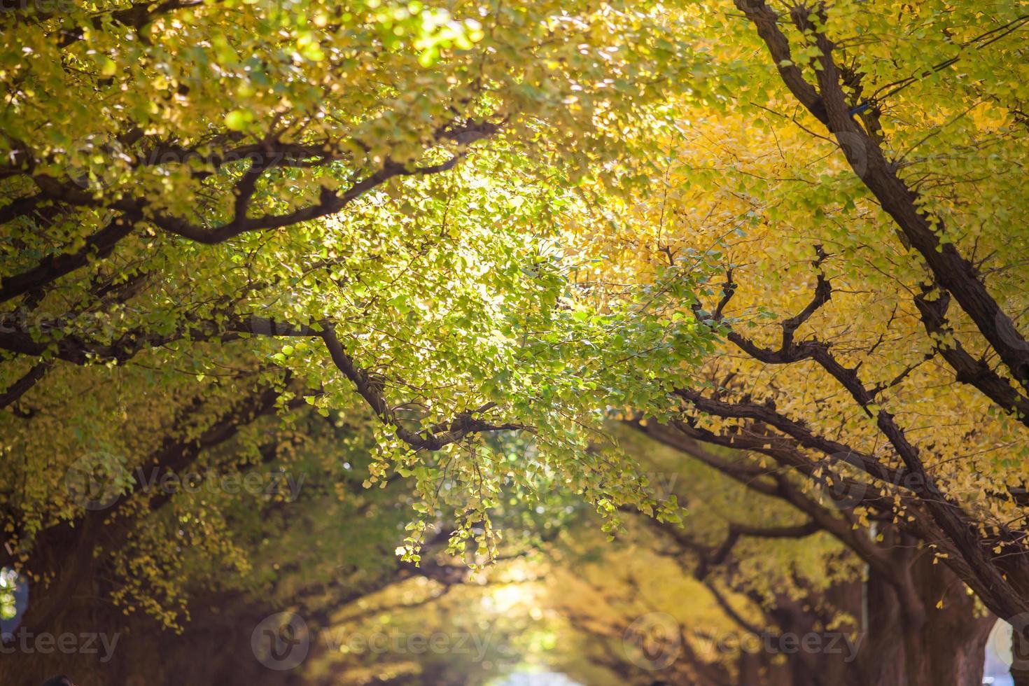árvores amarelas de outono foto