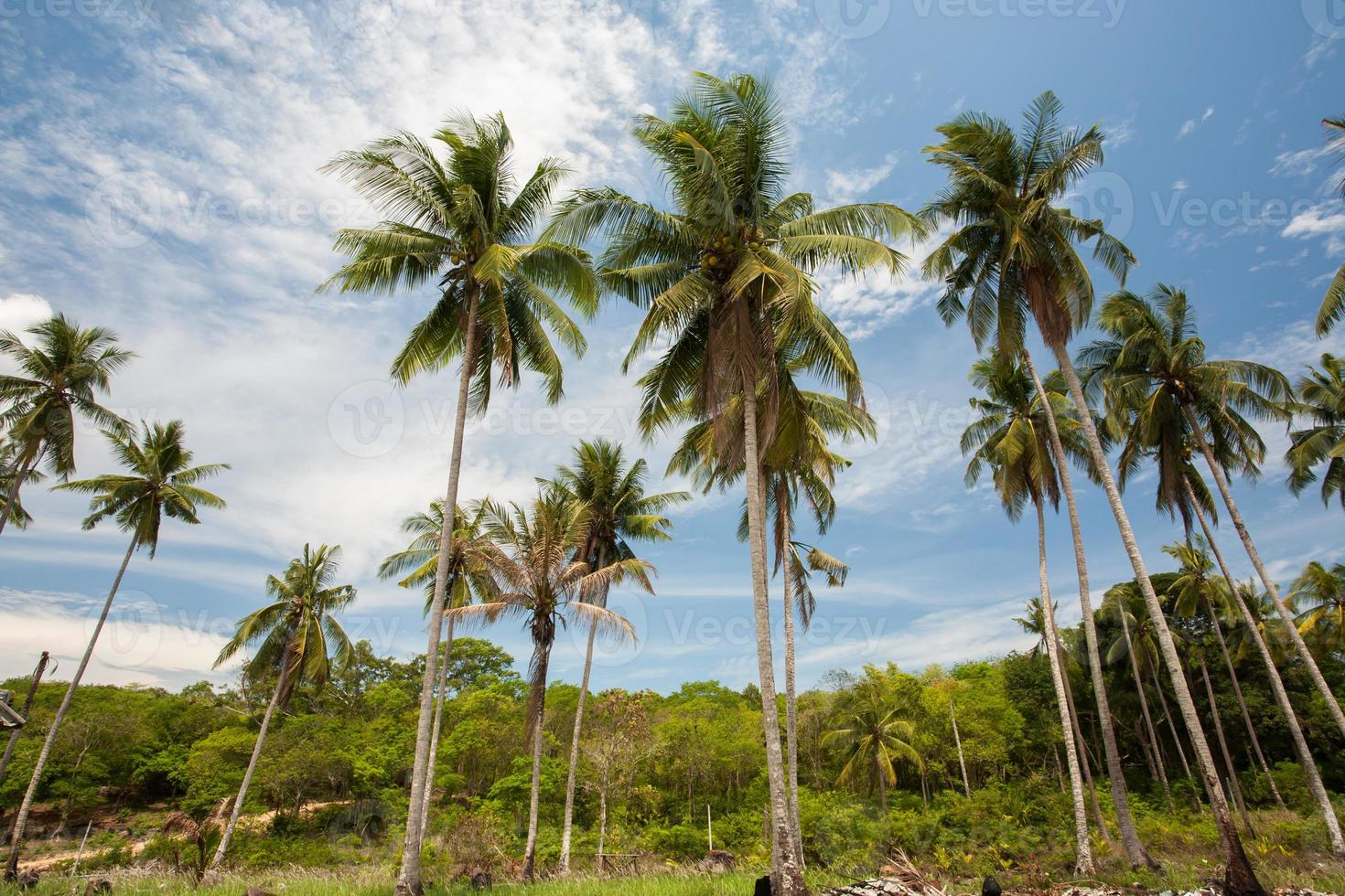 palmeiras e céu azul foto