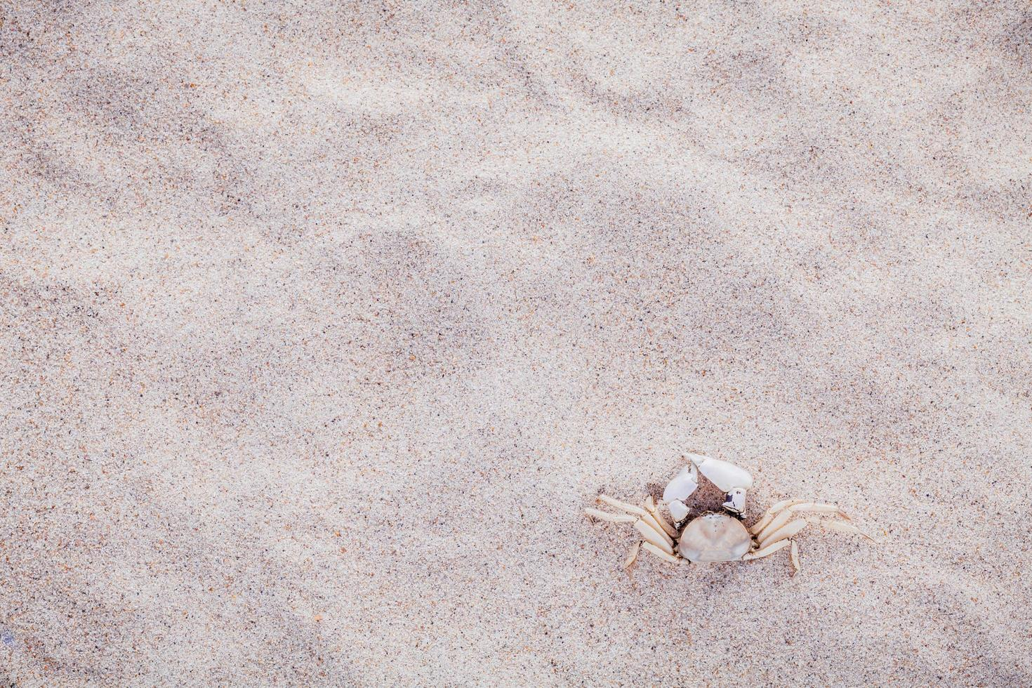 caranguejo branco na areia foto