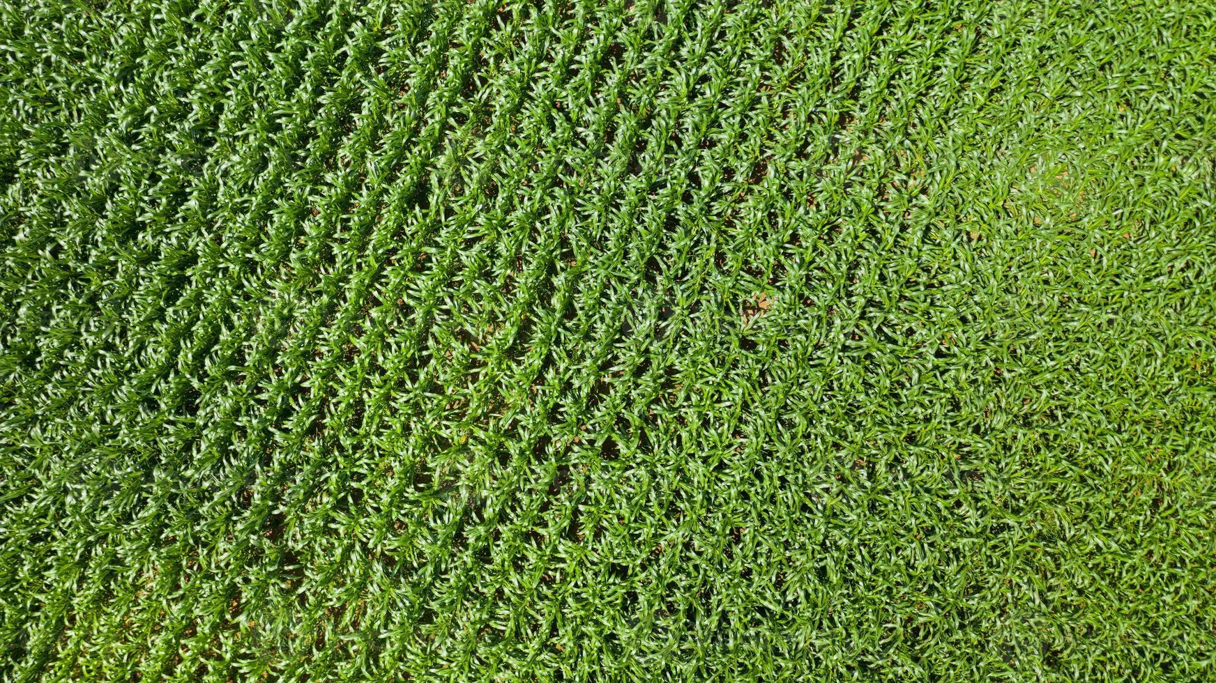 vista de cima dos campos de milho foto