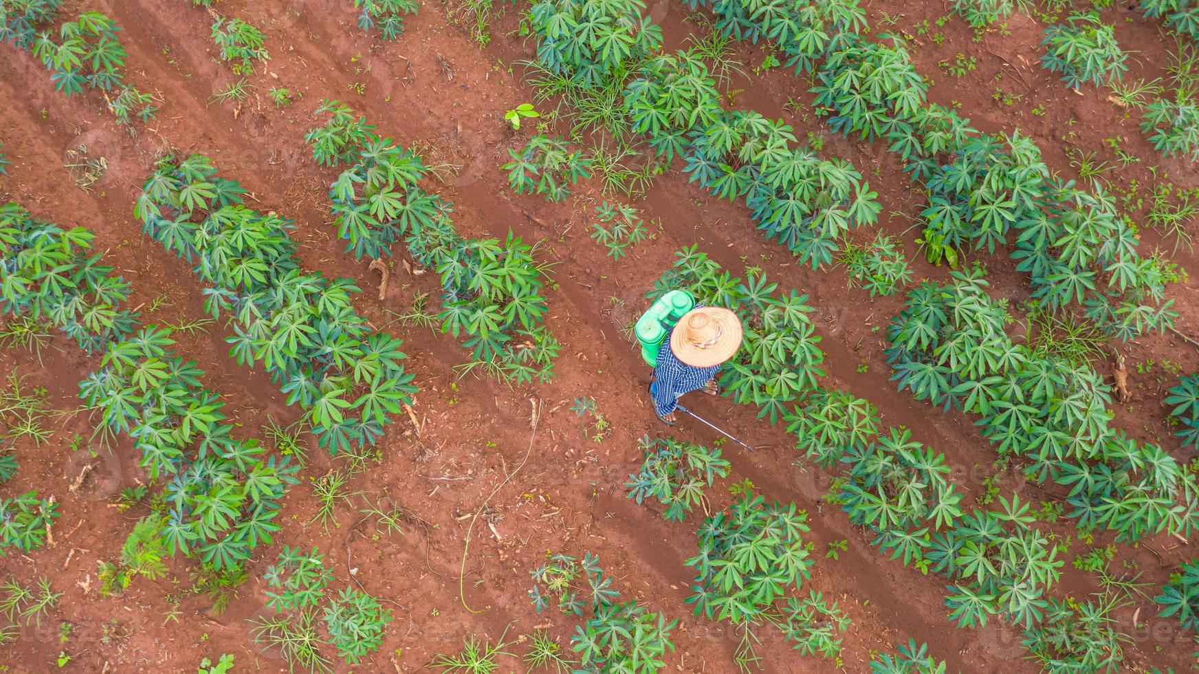 vista aérea de cima de fazendeiros trabalhando na fazenda de mandioca foto