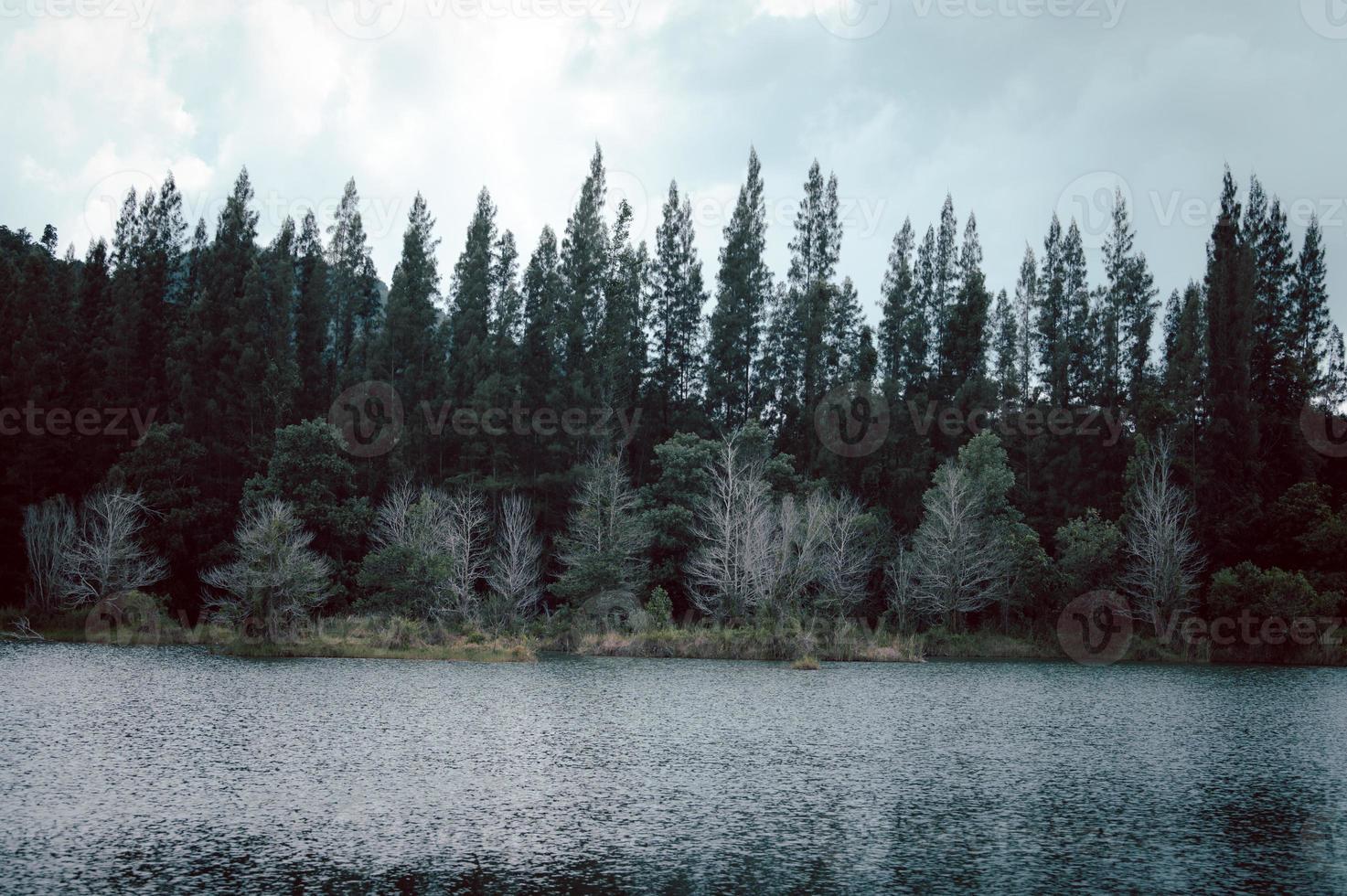 lago e floresta de pinheiros no parque público de liwong, chana, songkhla, Tailândia foto