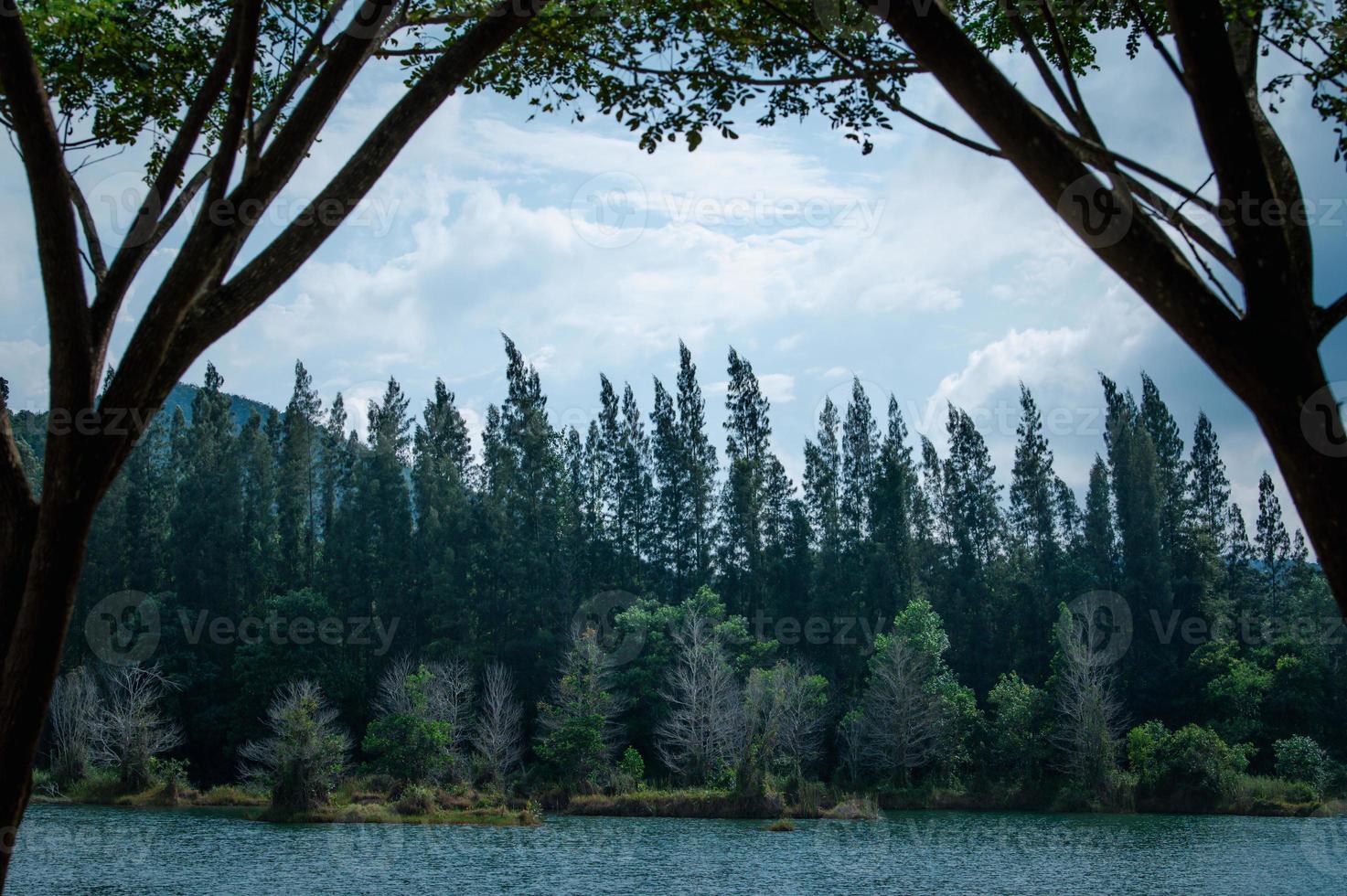 lago e floresta de pinheiros no parque público de Liwong em Songkhla, Tailândia foto