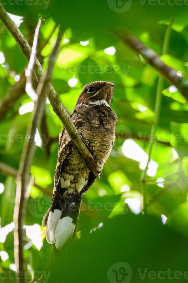 pássaro nocturno num galho de árvore na floresta foto