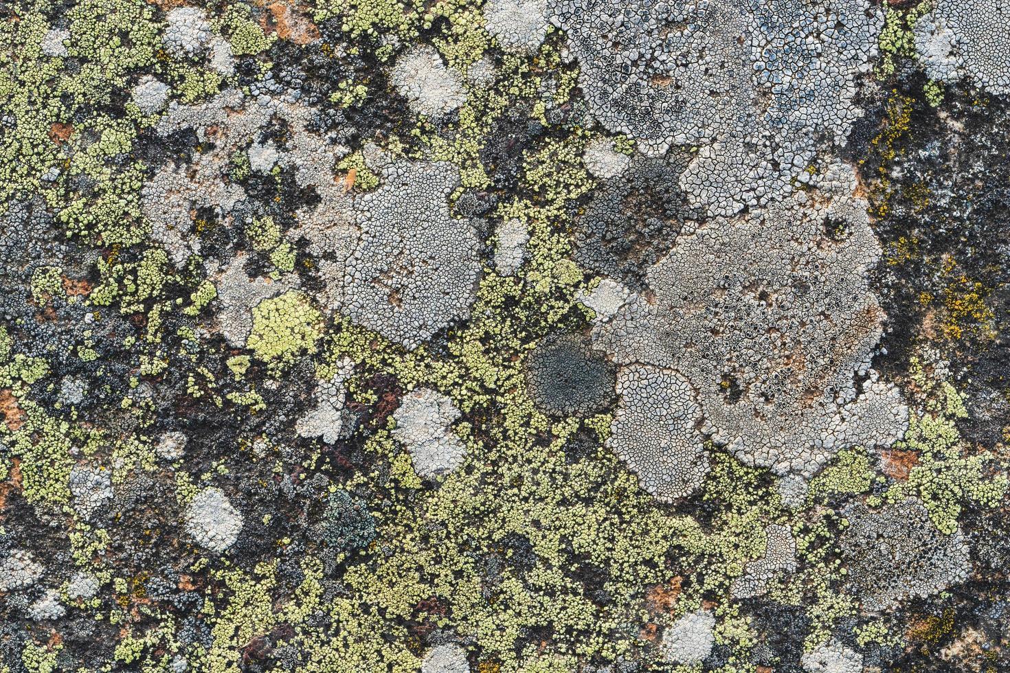 textura de líquenes sobre uma superfície de pedra foto