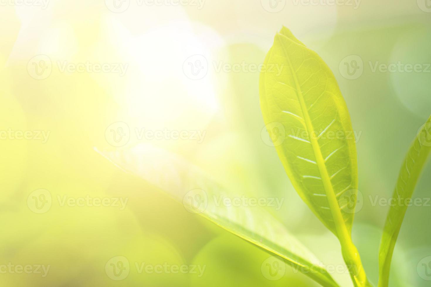 folha e planta verdes com sol no jardim foto