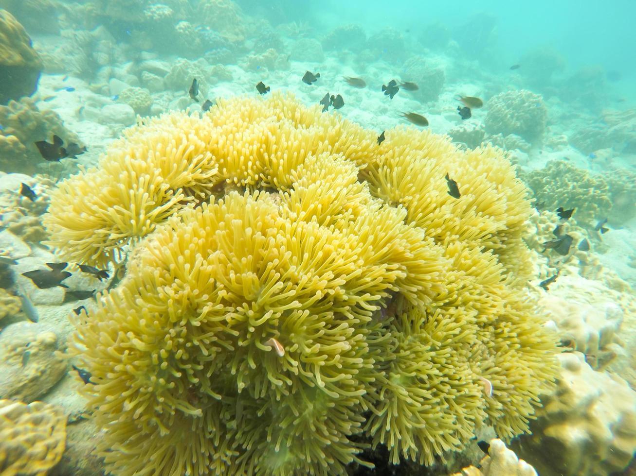 peixe perto de corais foto