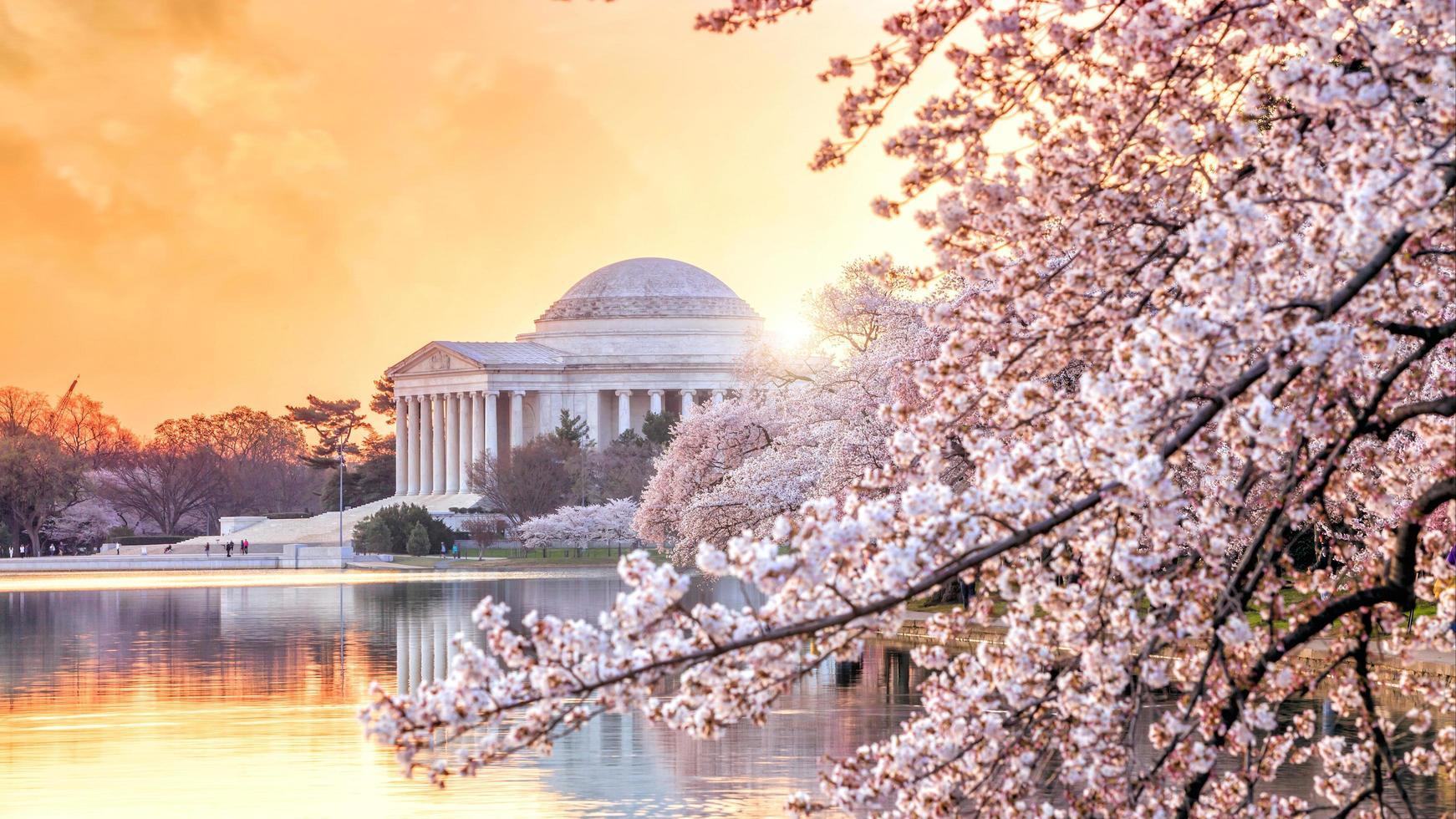 o memorial de jefferson durante o festival da flor de cerejeira foto