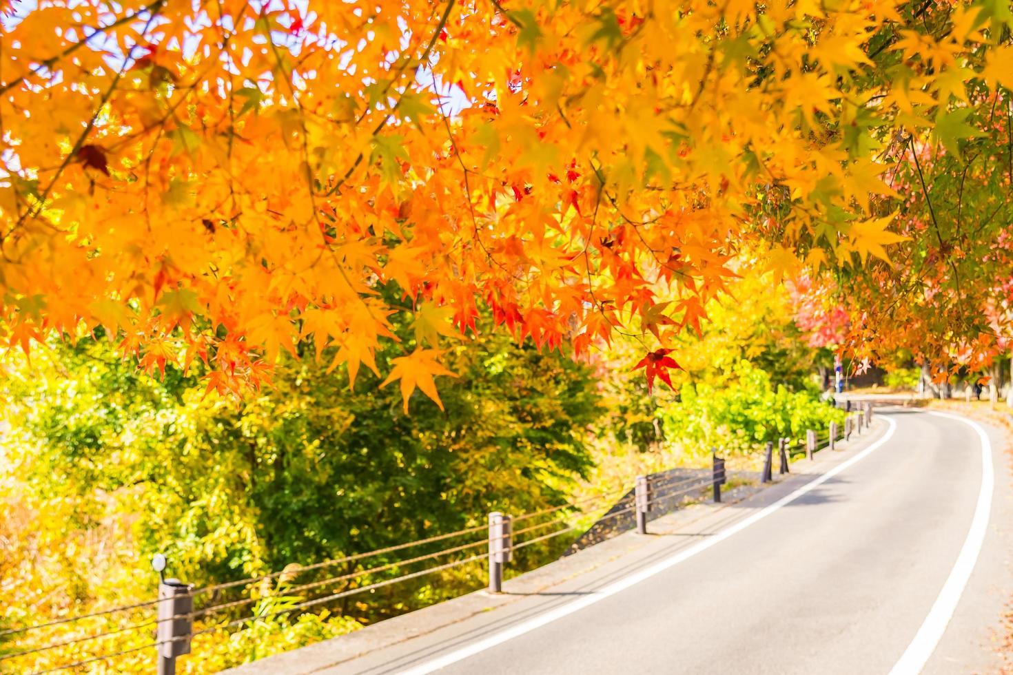 linda folha de bordo vermelha e verde na árvore foto