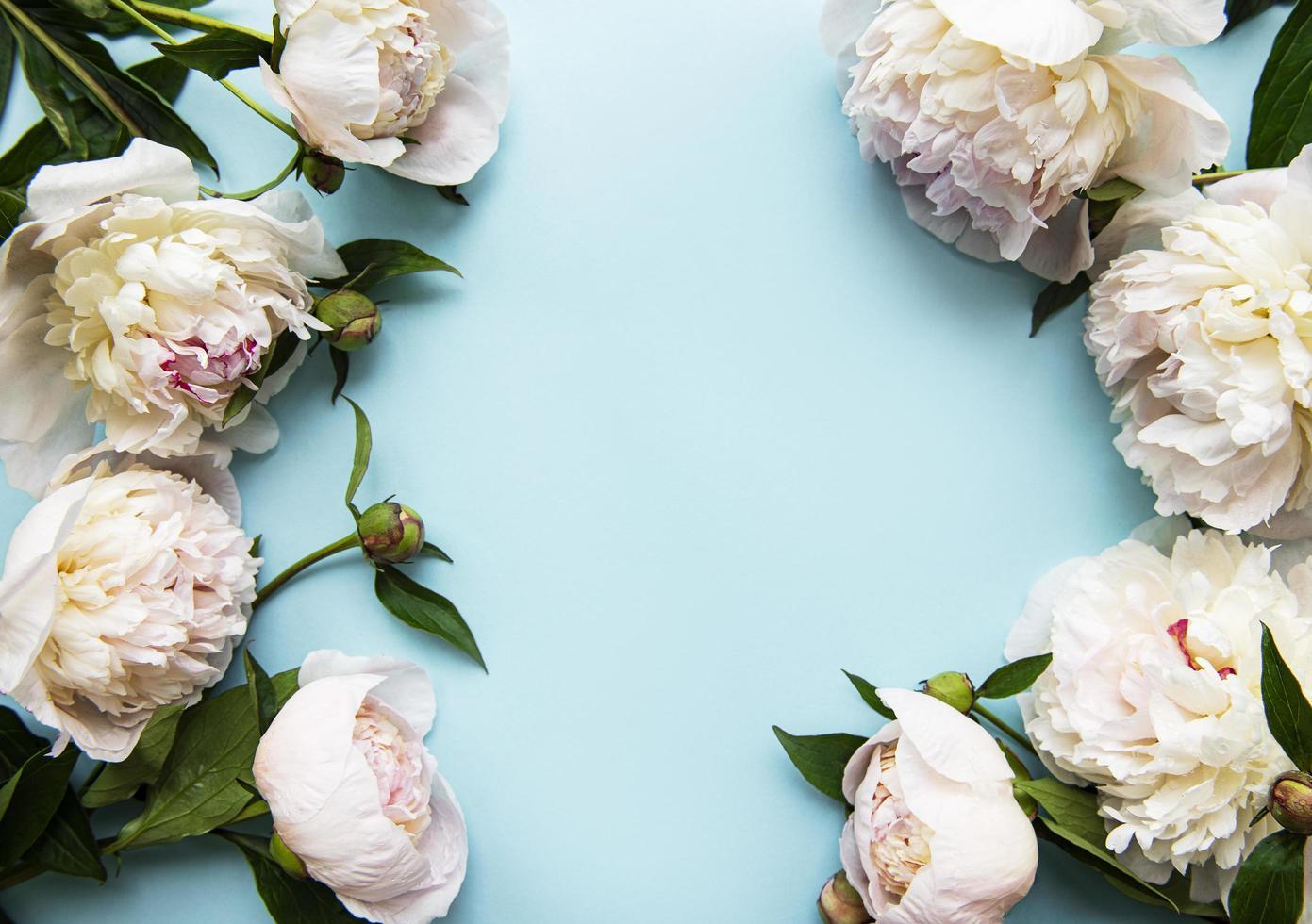 flores de peônia em um fundo azul pastel foto