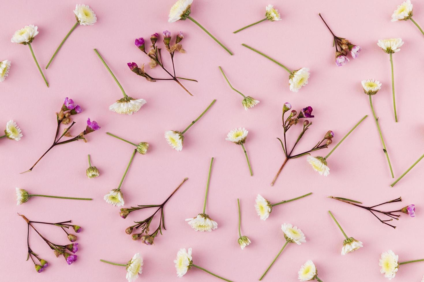 flores planas em fundo rosa foto