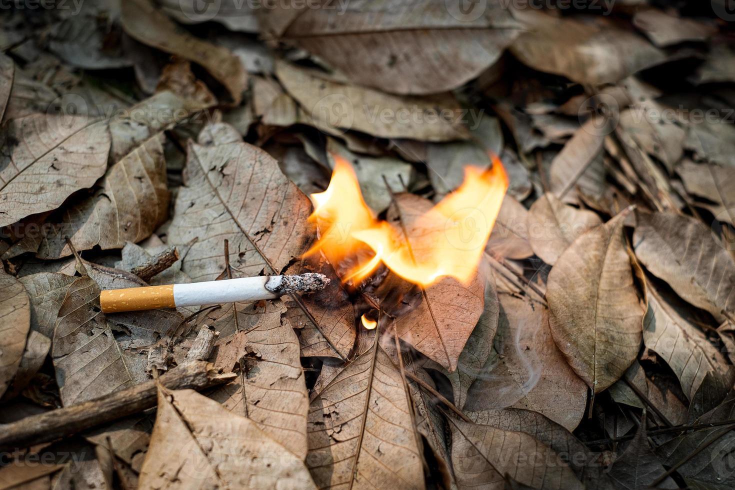 bituca de cigarro jogada descuidadamente em folhas secas, fumegando foto