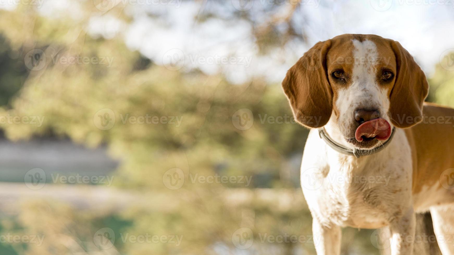 bom menino cachorro no fundo desfocado da natureza foto