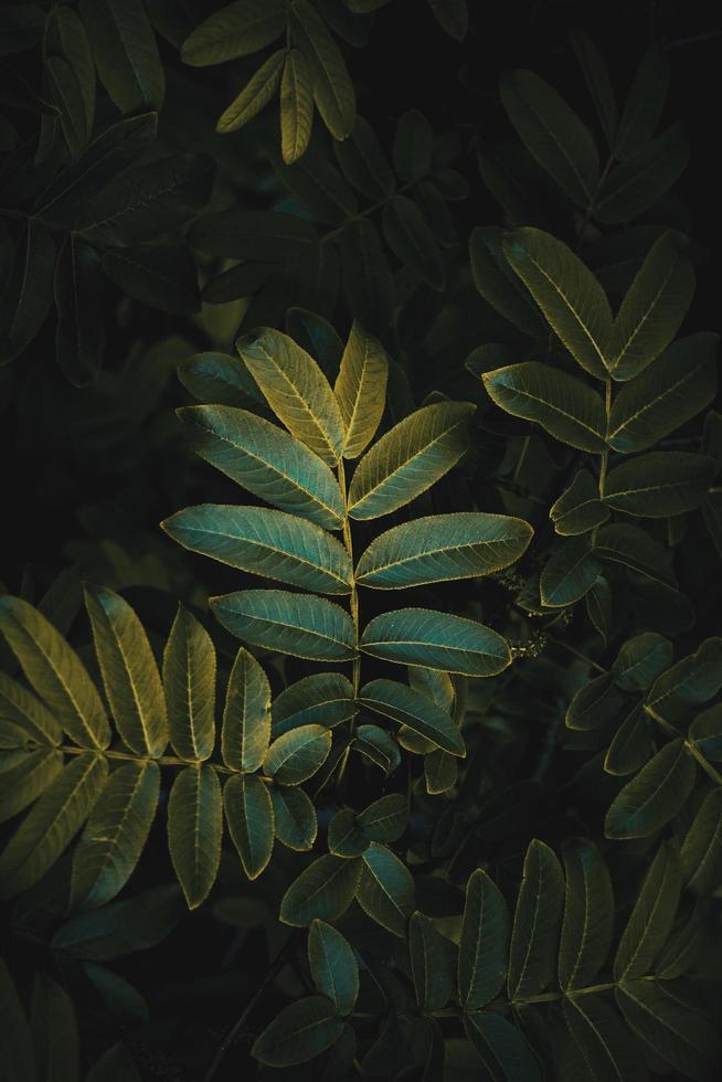 folhas verdes da planta na temporada de primavera, fundo verde foto