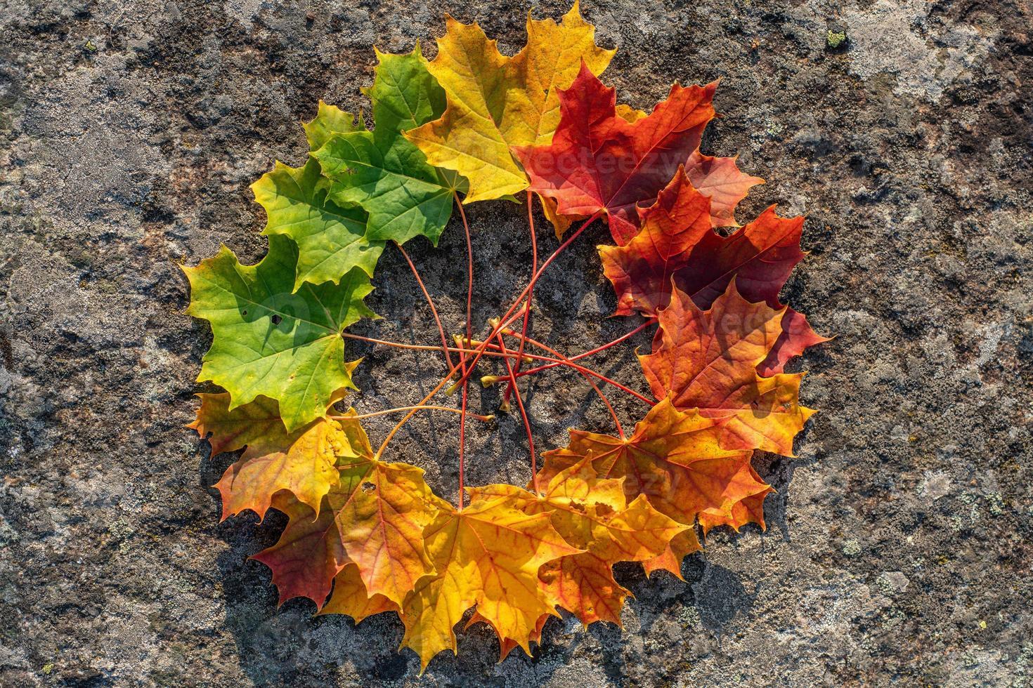 círculo de folhas de bordo em tons de verde a vermelho foto