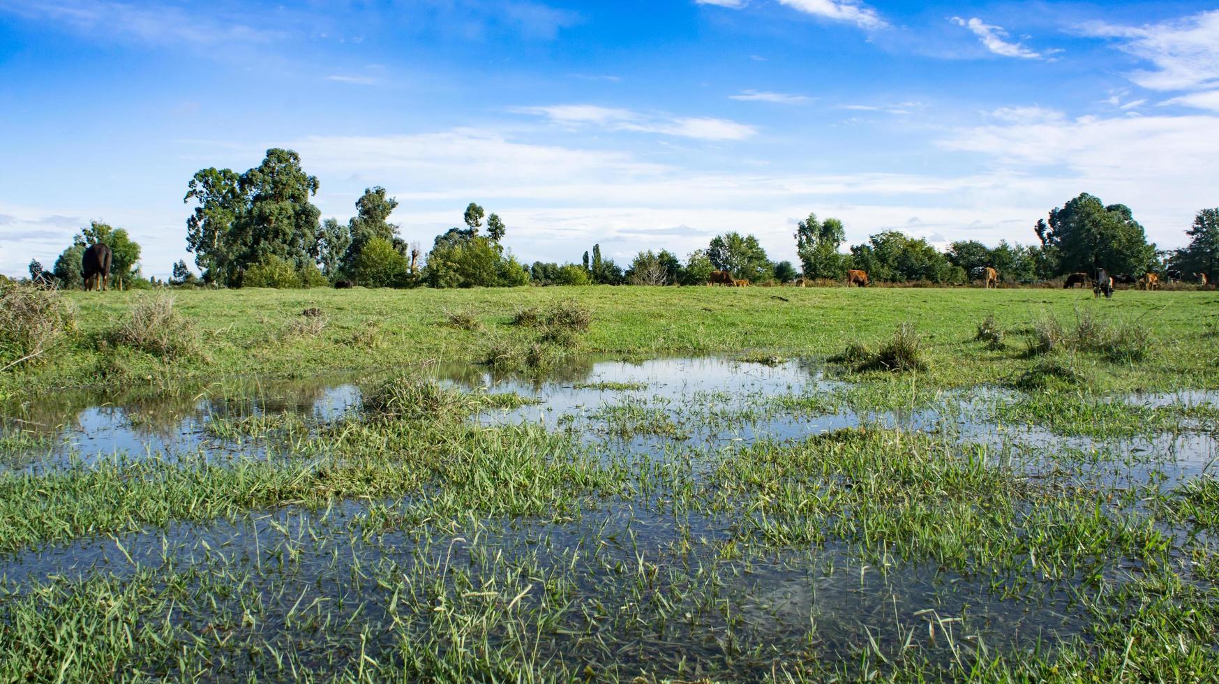 paisagem natural de um campo verde foto