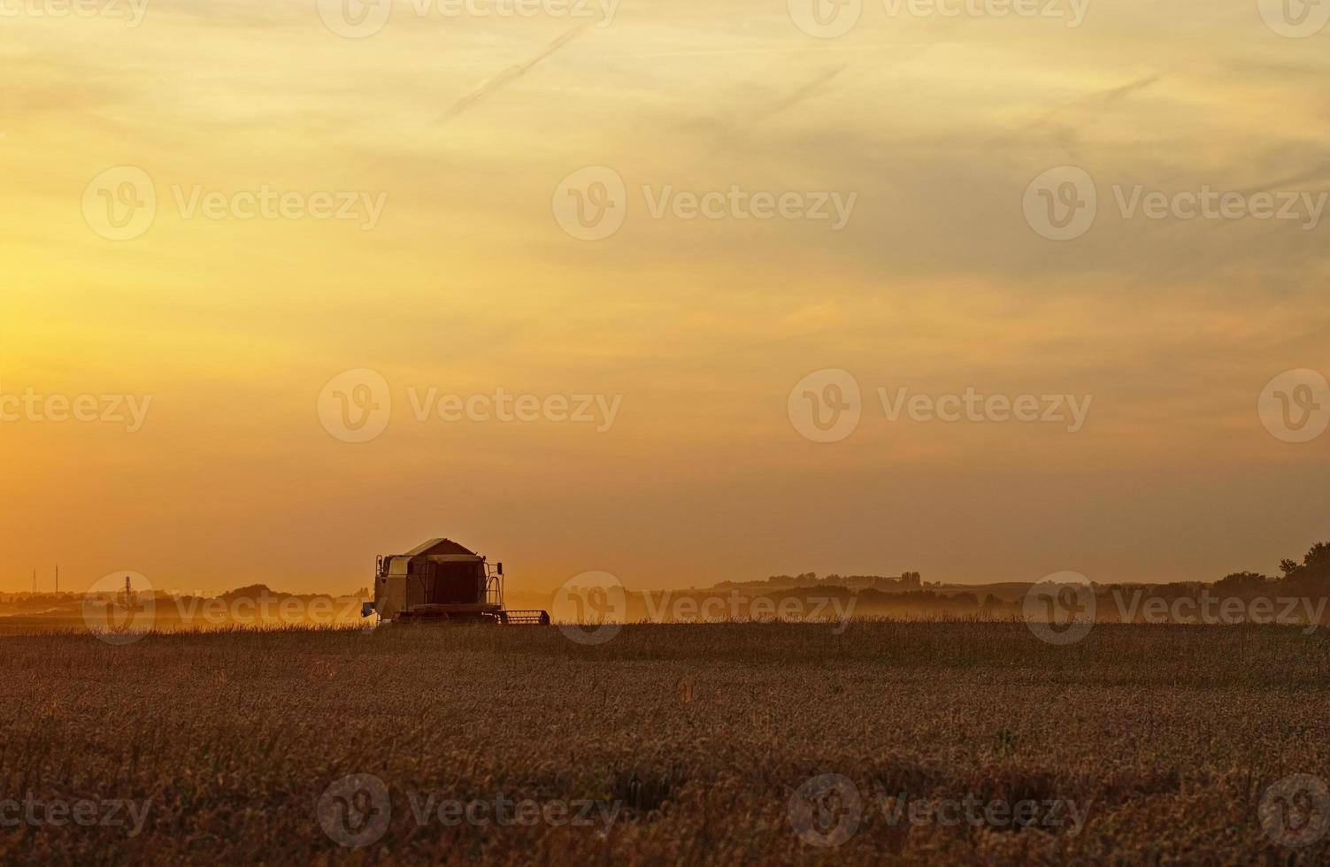 combinar a colheita de cereais ao pôr do sol foto