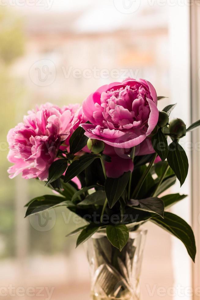 buquê de peônias rosa brilhante na janela foto