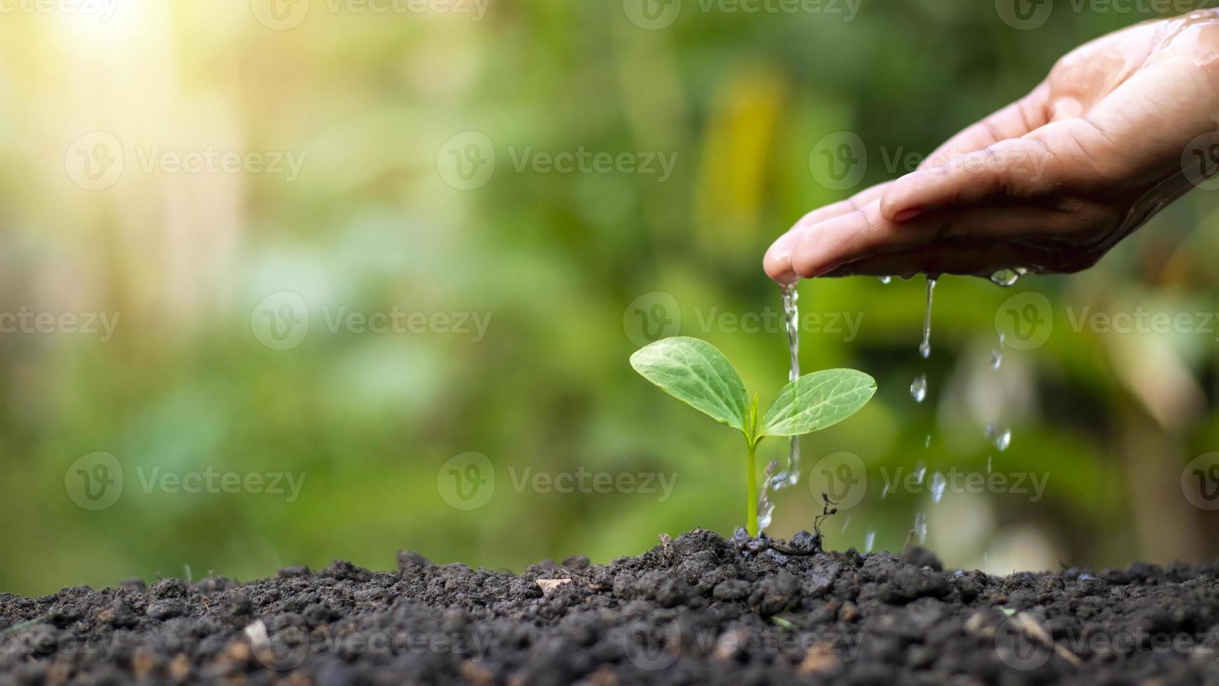 plantas de rega manual que crescem em solo de boa qualidade na natureza, cuidados com as plantas e ideias para o cultivo de árvores. foto