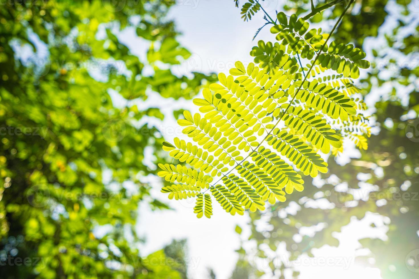 folha verde closeup com luz do sol pela manhã foto
