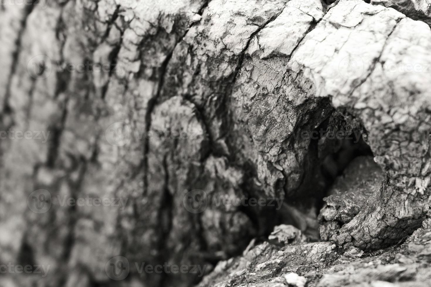 close-up da casca de uma árvore foto