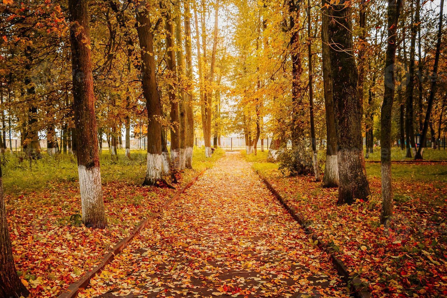 lindo parque de outono, caminhos entre árvores amarelas ao sol foto