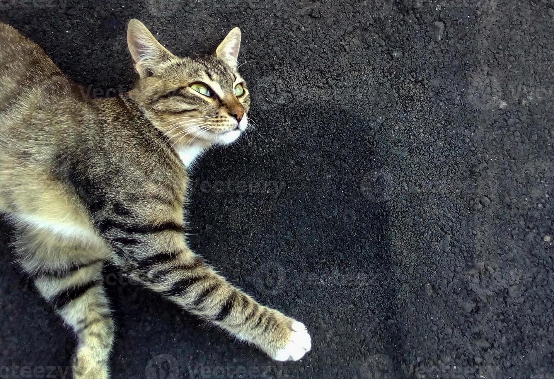 o gato está deitado no asfalto foto