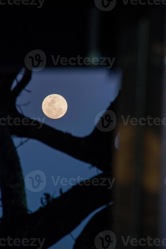 lua cheia com a silhueta de filiais no rio de janeiro brasil. foto