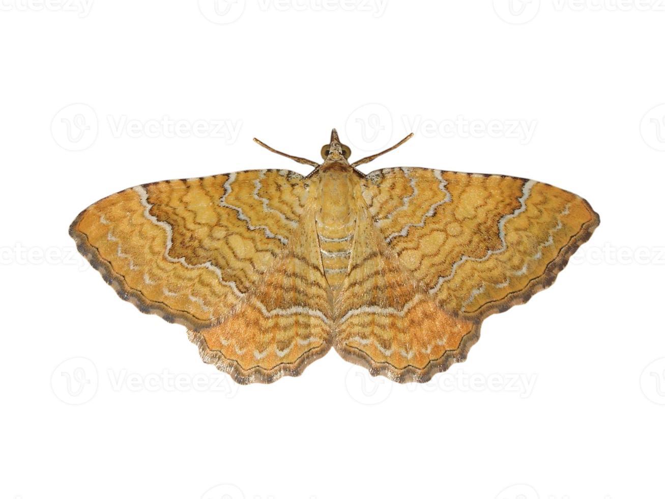 borboleta mariposa isolada foto