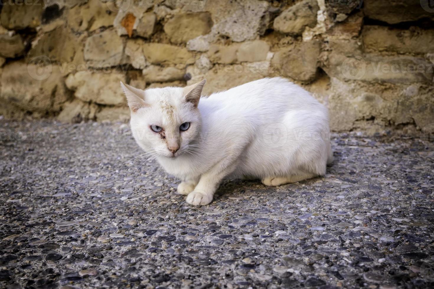 gato branco de rua abandonado foto
