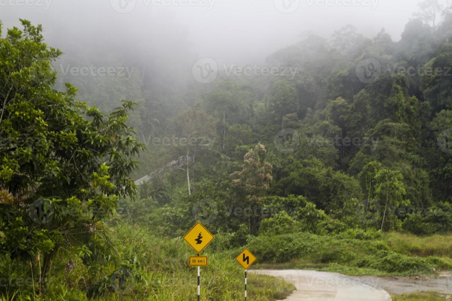 floresta tropical de Sarawak foto