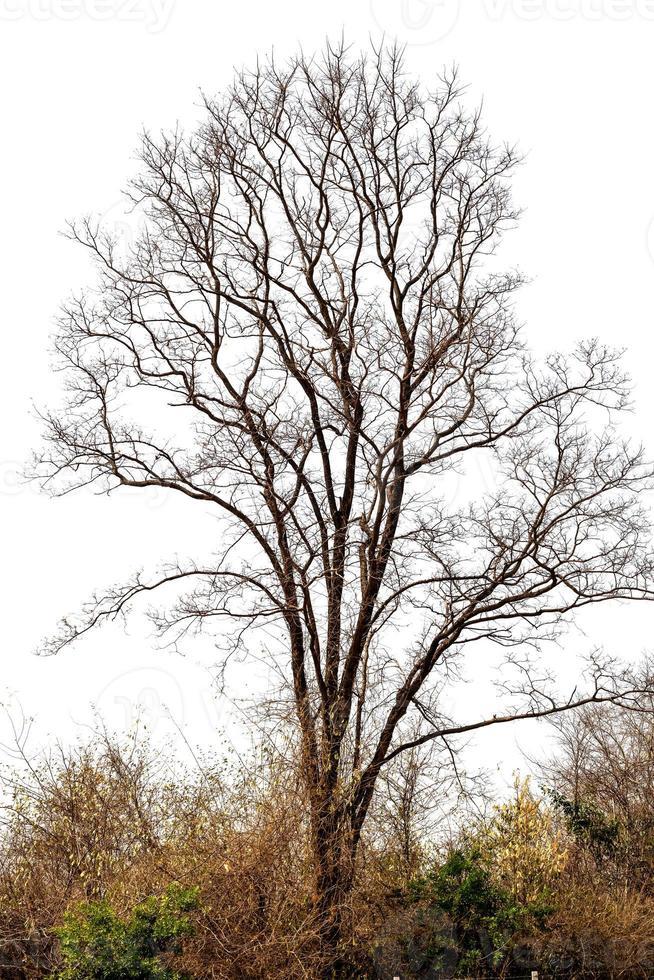abstrato de árvore seca foto