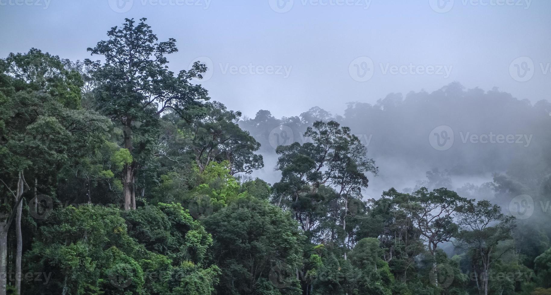 manhã nublada na camada densa de floresta e montanhas. foto