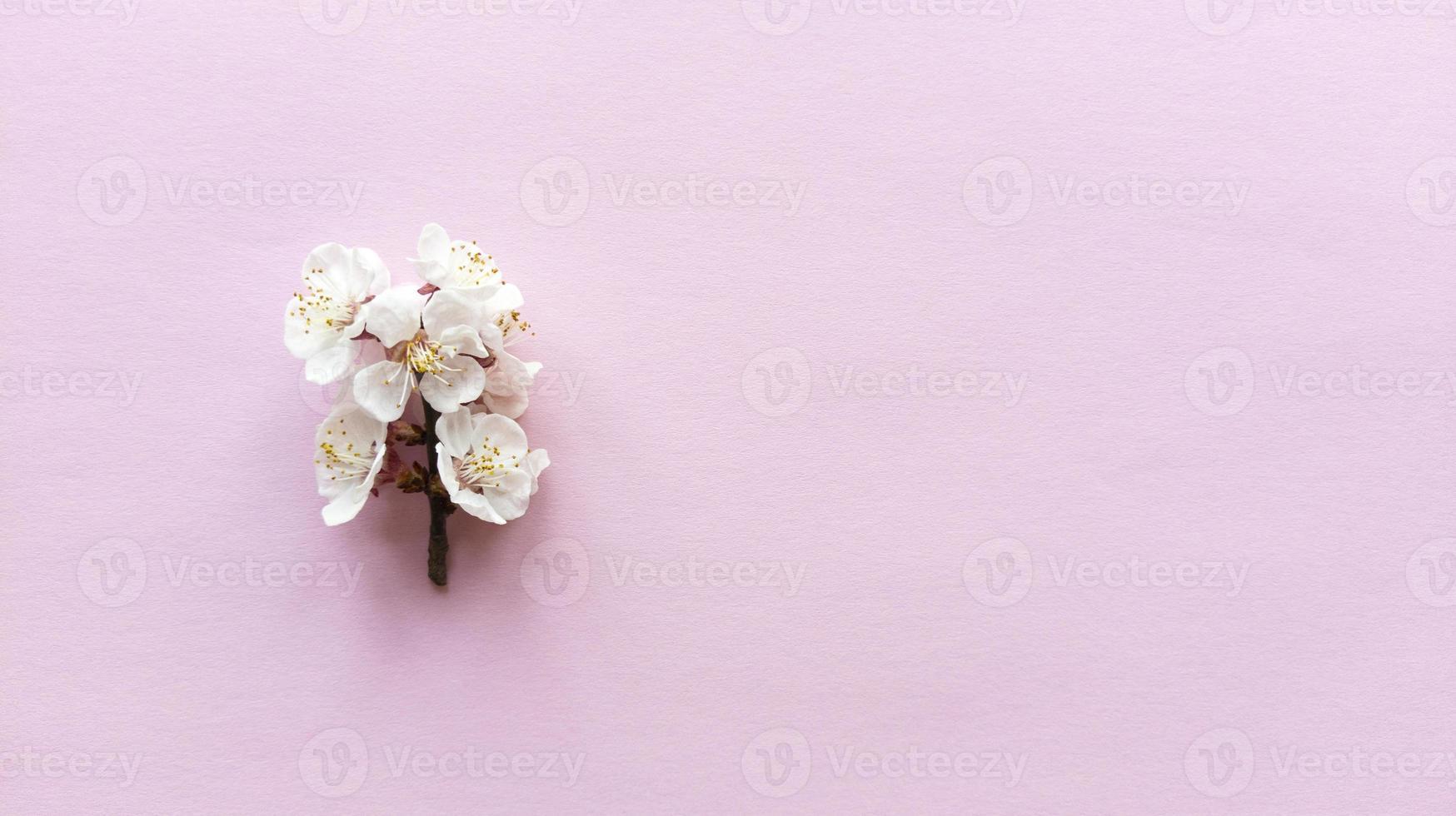 florescer em fundo rosa. camada plana simples com textura pastel foto