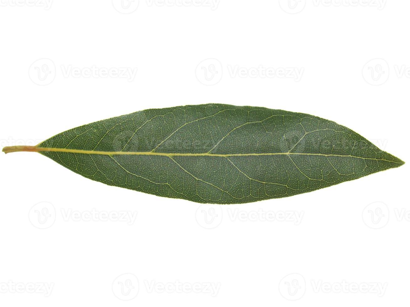 folha de louro louro isolada foto