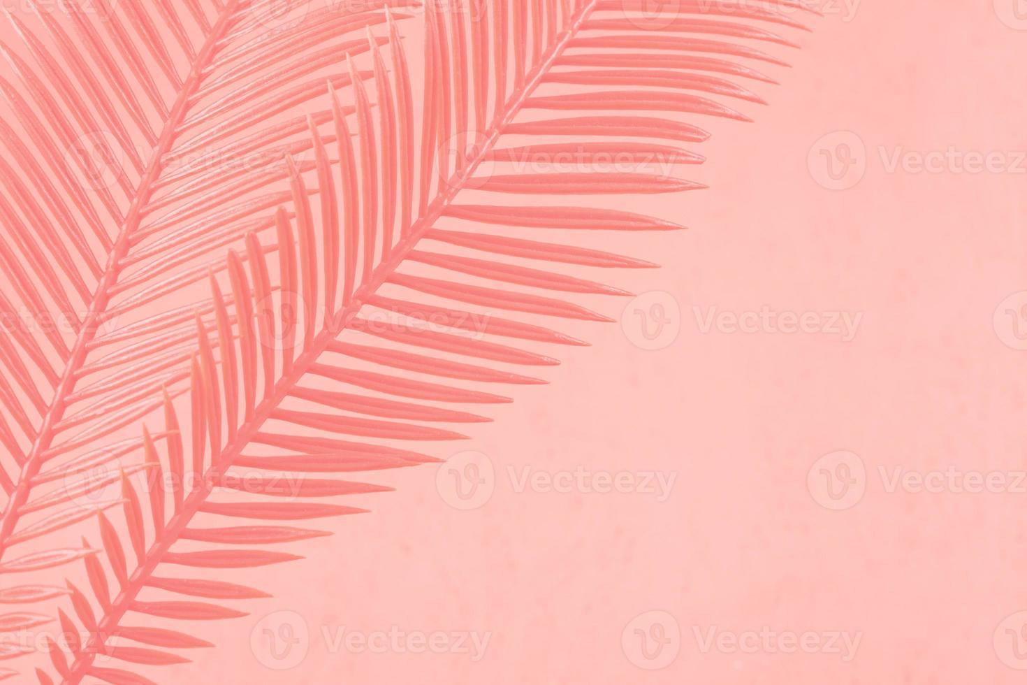 duas folhas de palmeira em um fundo de coral foto