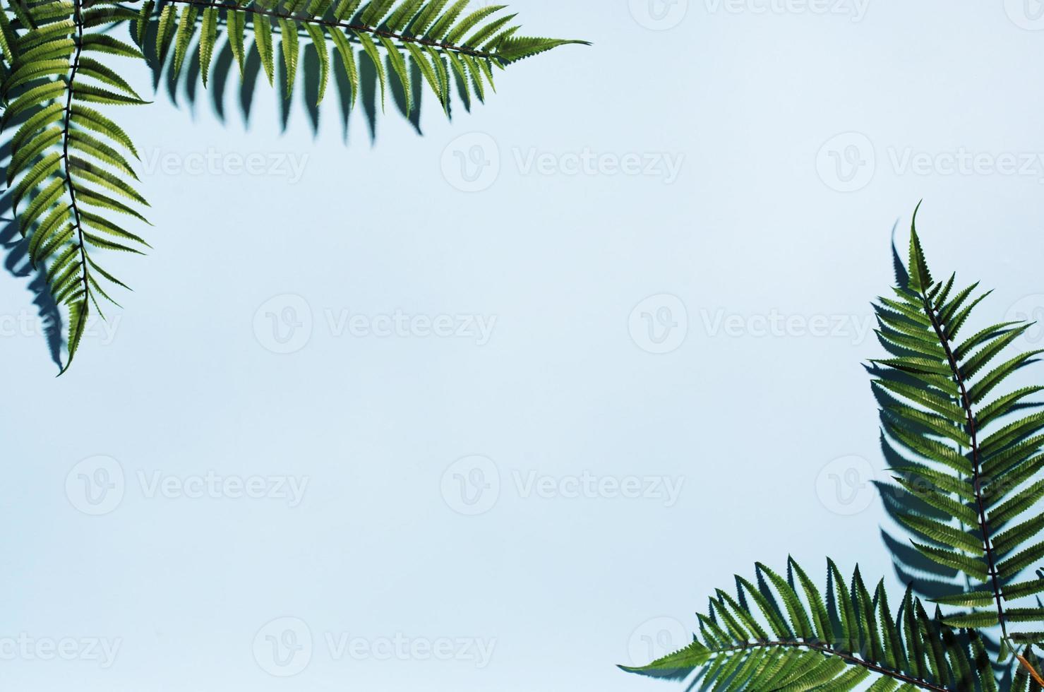 moldura de folhas de palmeira foto