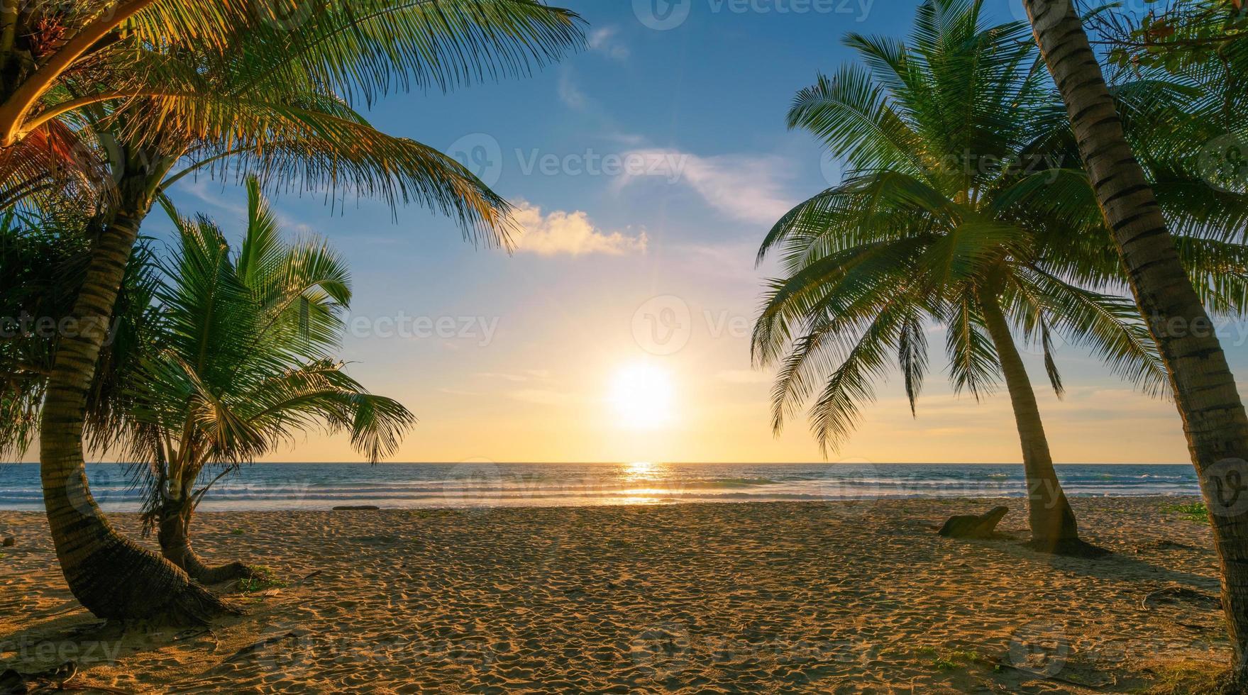 coqueiros na praia, pôr do sol no céu foto