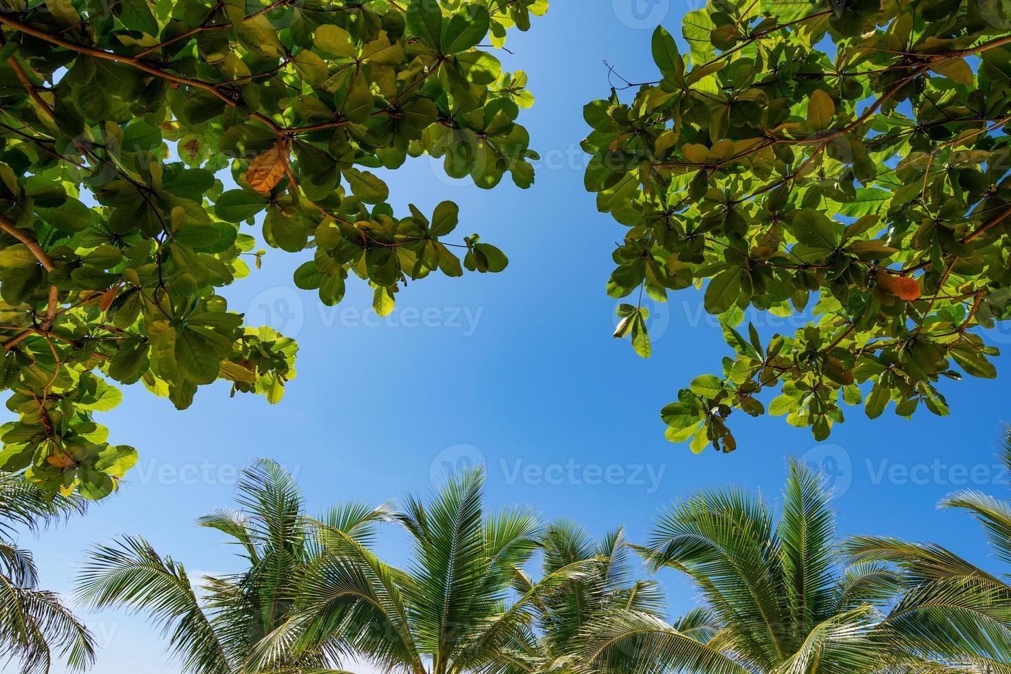 vista inferior para folha de palmeiras tropicais foto