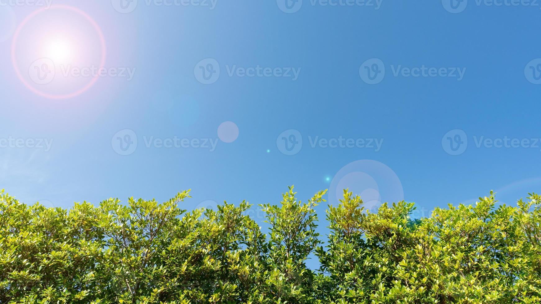 galhos de árvores emolduram lindas folhas verdes foto