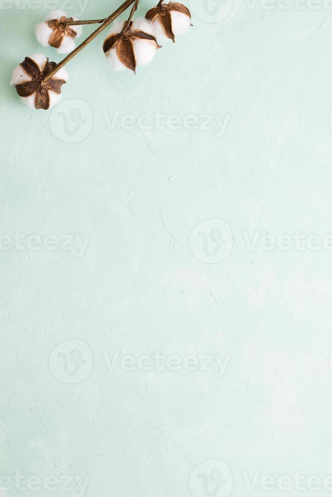 galho de vagem de algodão em fundo verde claro foto