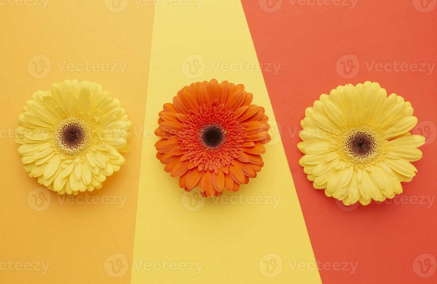 vista de cima das flores na mesa foto
