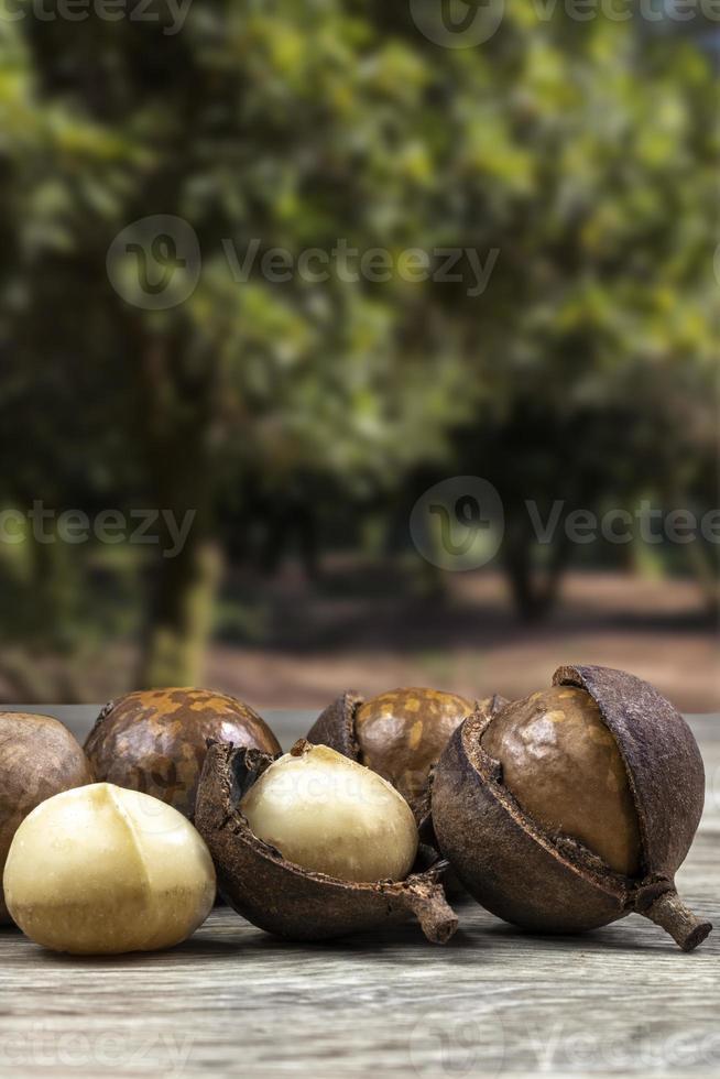grupo de nozes de macadâmia em uma mesa de madeira com um pomar ao fundo, Brasil foto