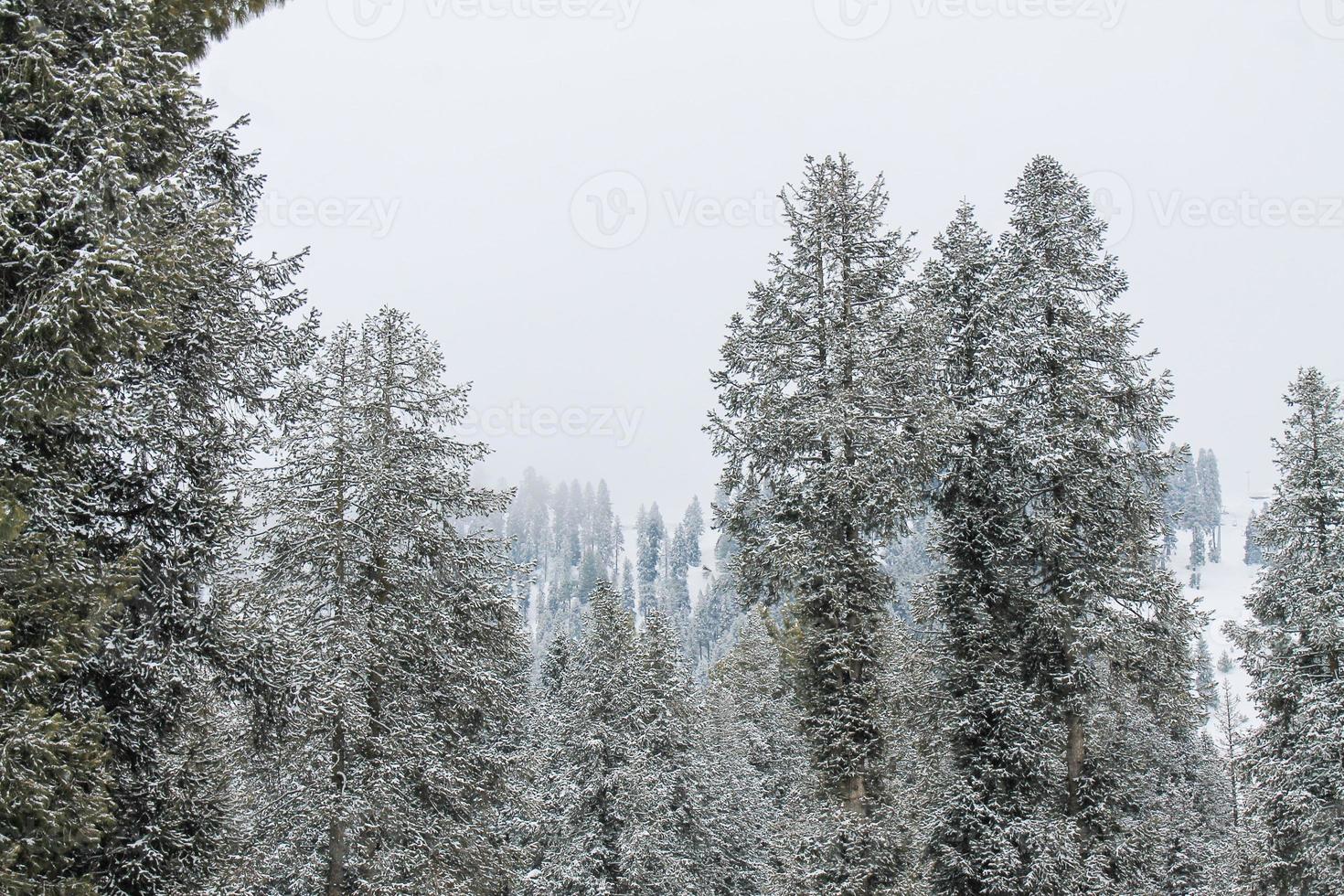 tree forest malam jabba e kalam swat paisagem paisagem foto