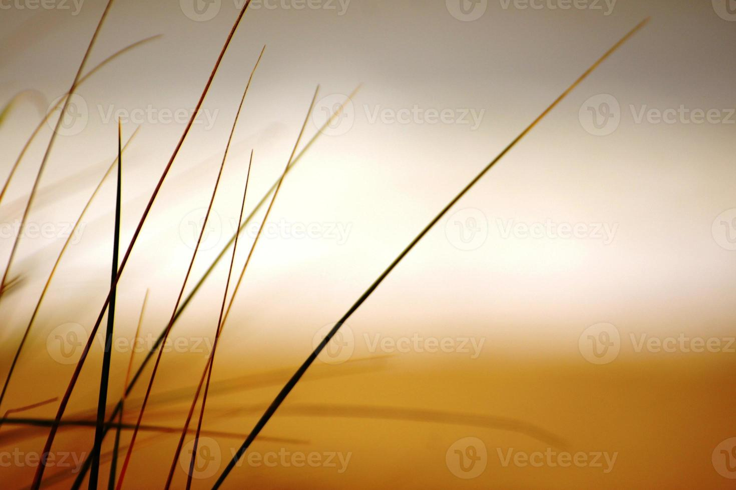 grama de praia foto
