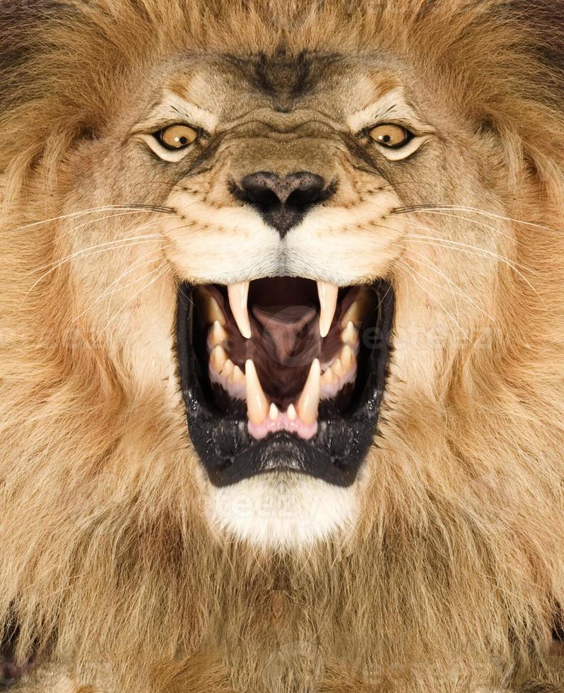Rei Leão foto