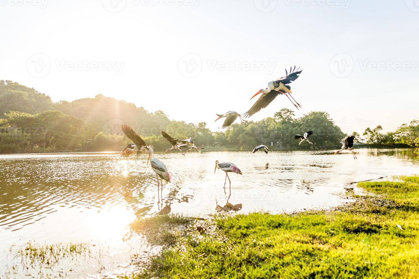 pássaro na vida selvagem foto
