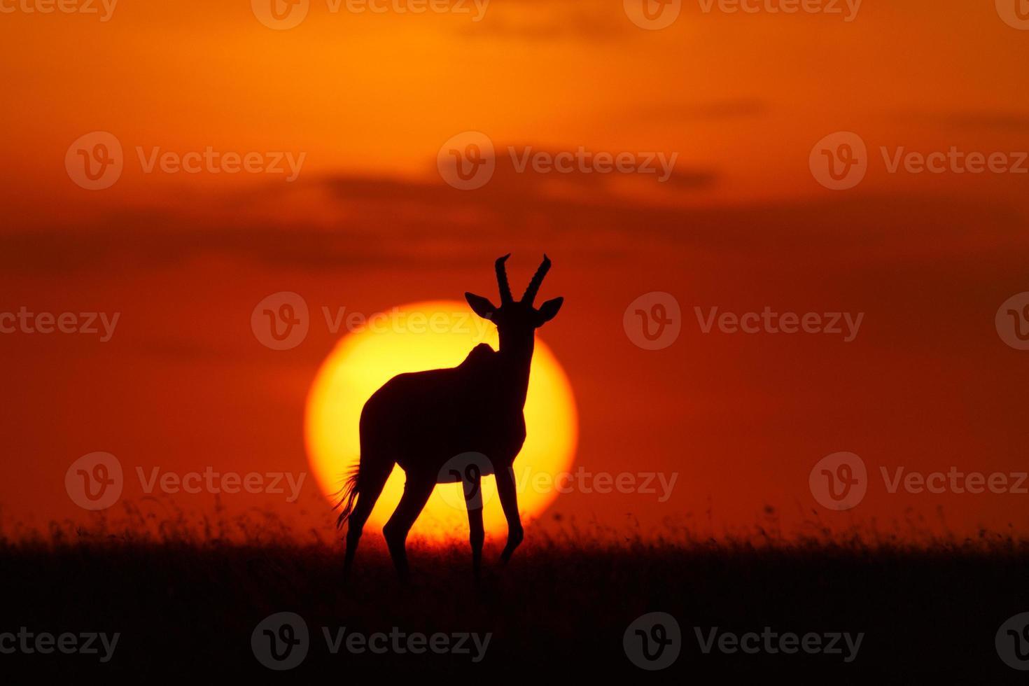 topi pôr do sol foto